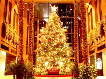 beautiful_christmas_tree_pictures_18